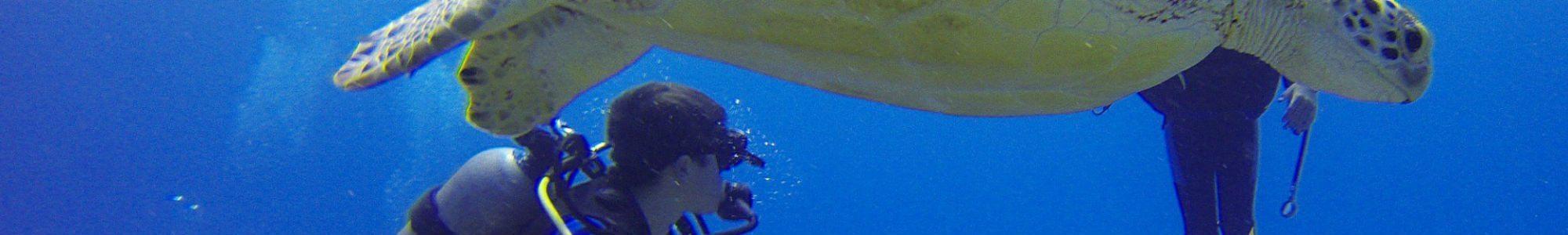 scuba diving trips